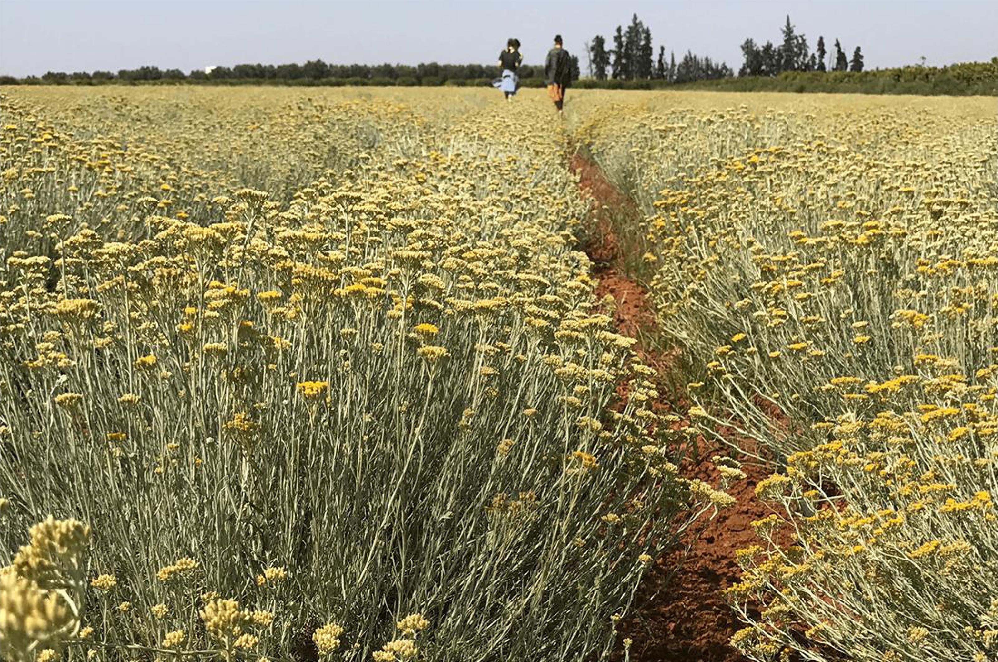世界初のNON-GMOコスメ