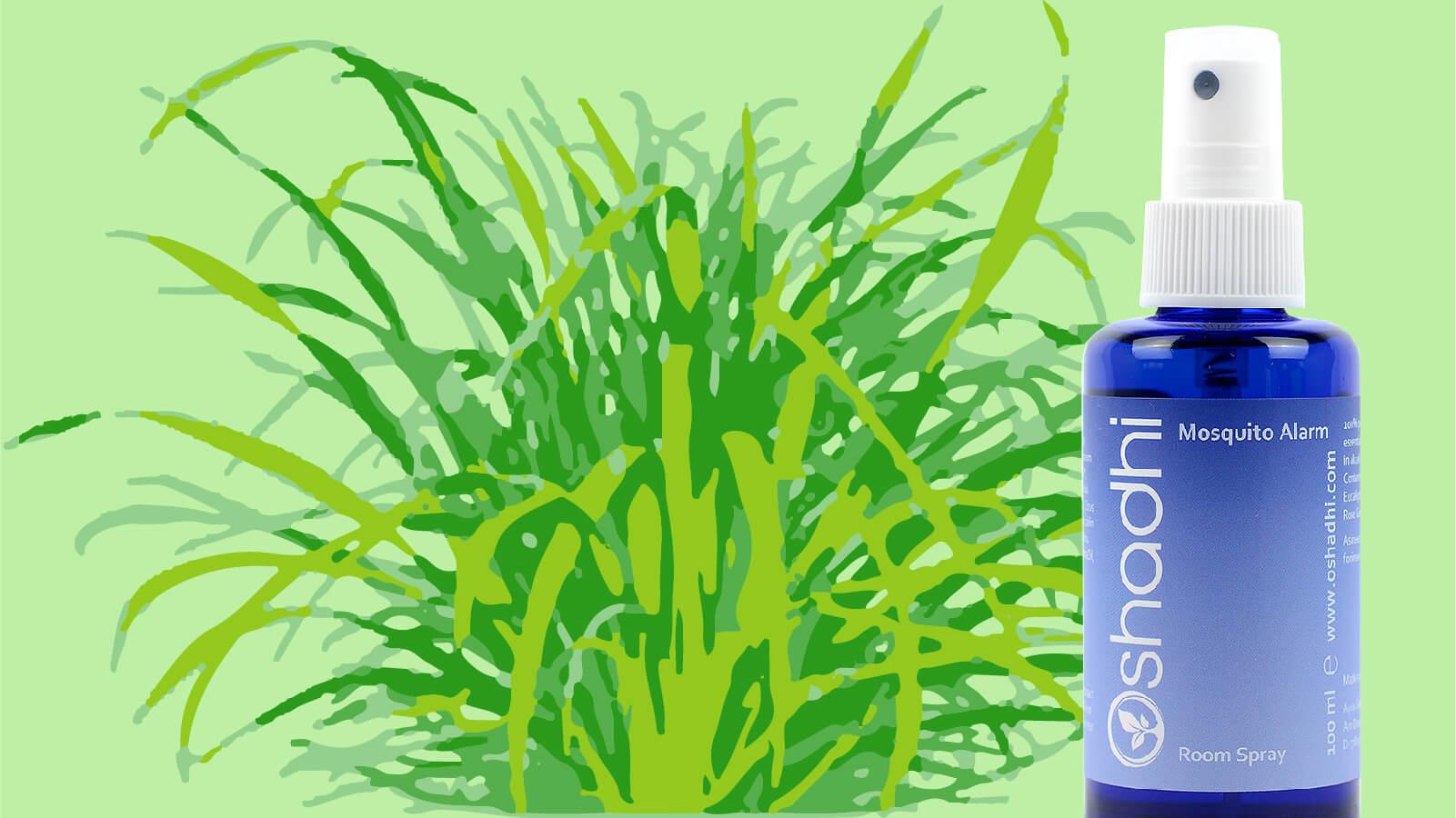 天然ハーブ「シトロネラ」の虫除け効果