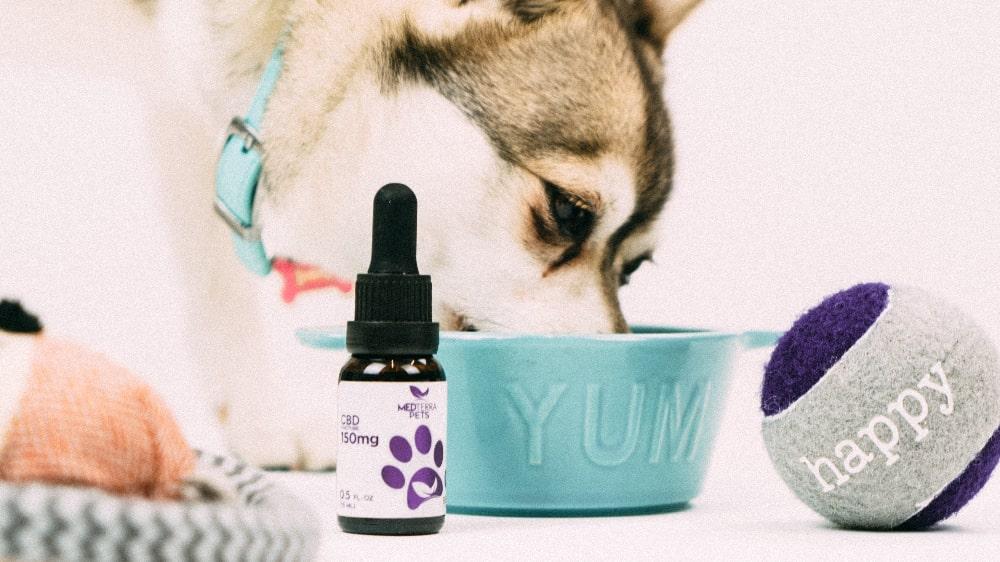 大切なペットを守り、健康を維持する。ペット用CBD