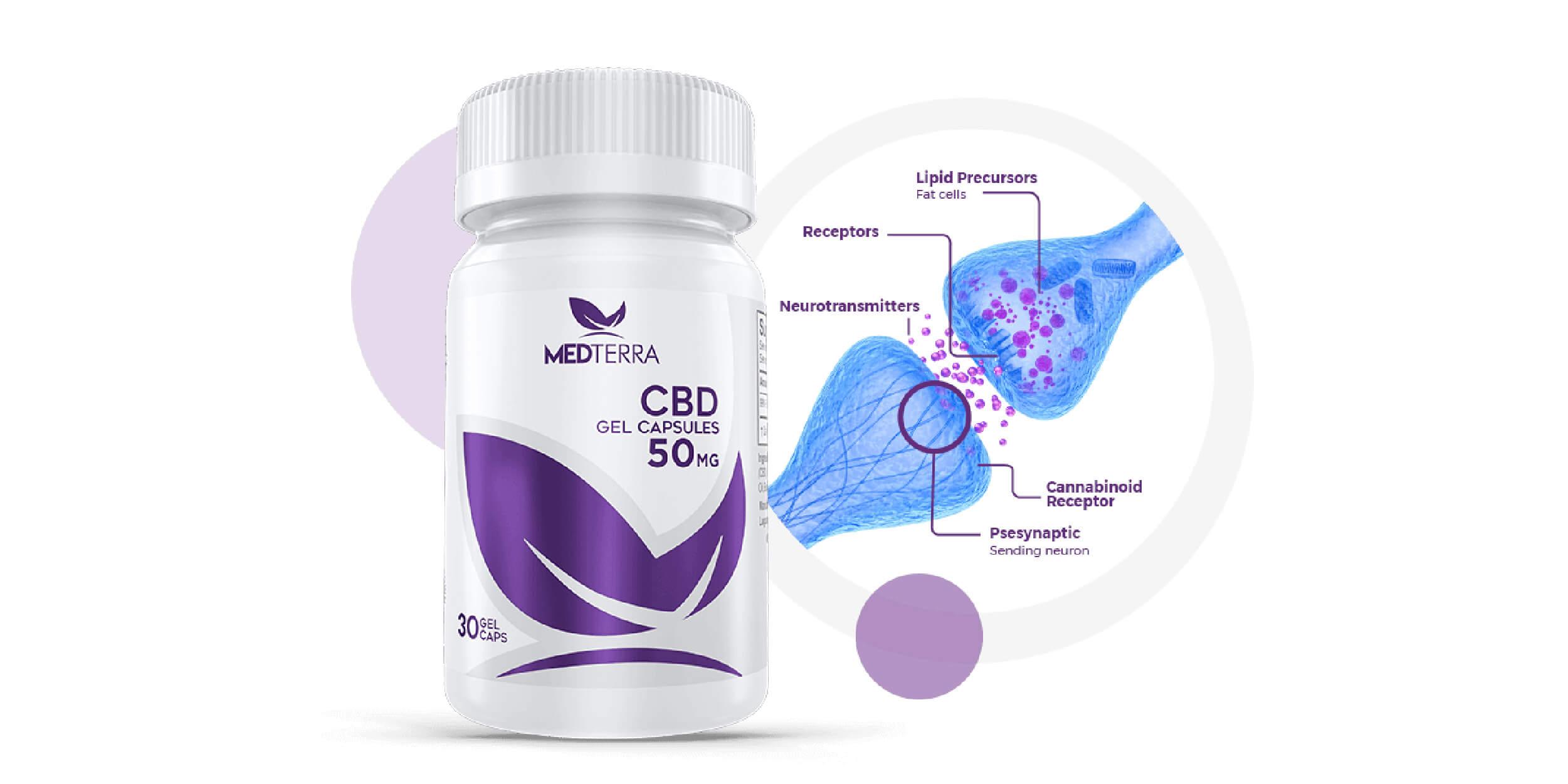 メディテラ-CB1 および CB2 受容体とは?
